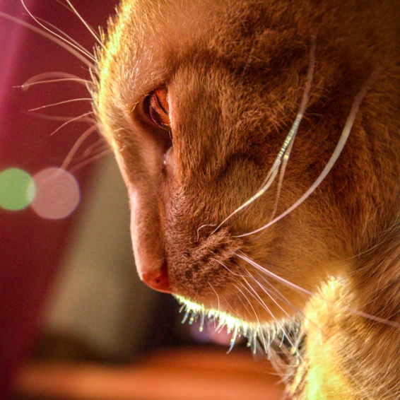 Det svänger ju katten bild 1 Fotograf Alexandra Ulander -2