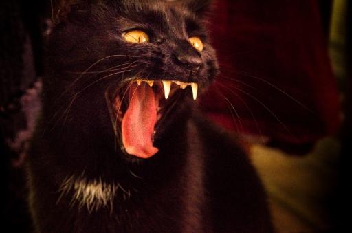 Det svänger ju katten bild 2 Fotograf Alexandra Ulander -1