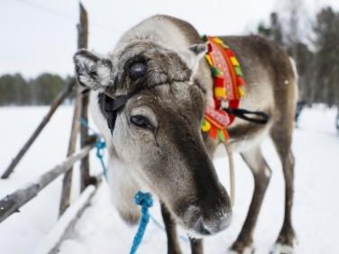 header_reindeer_winter_snow-400x300